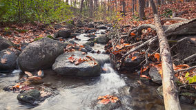 A small stream in the woods. A small creek in the woods, fallen leaves, rocks  and trees Royalty Free Stock Photo