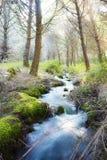 Small stream woods Royalty Free Stock Photo
