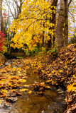 Small Stream Yellow Leaves in Fall Stock Photography