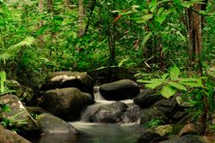 Free Small Streams Flow Through Abundant Tropical Forests In Forest Of Thailand,Phang Nga,Koh Yao Yai Royalty Free Stock Photos - 159127468