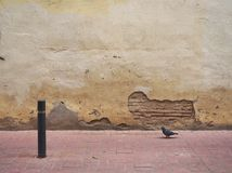 Pigeon walking by a filthy wall royalty free stock photo