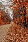 Small street scenery in the forest. Royalty Free Stock Photography