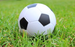 Small stress ball lying on the green grass Stock Image