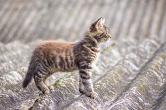 Small striped cat walking on the roof of the house royalty free stock photography