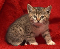 Small striped frightened kitten Stock Photography