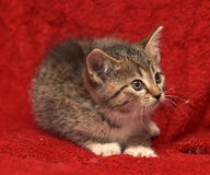 Small striped frightened kitten Stock Images