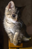 Small striped kitten. Illuminated from one side Stock Images