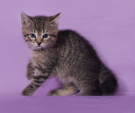Small striped kitten sitting on lilac Stock Images