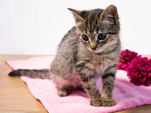 Small striped kitten. Sitting on a pink towel Royalty Free Stock Photography