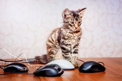 Small striped kitten surrounded by computer mice. Modern sophist. Icated technologies stock images