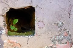 Small, but strong green plant growing inside the stone wall royalty free stock photos