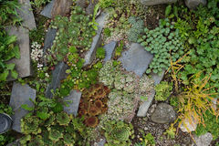 small succulent garden stock photo
