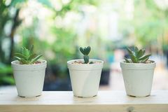 Small succulent pot plants decorative on wood window with morning warm light. Small succulent pot plants decorative on wood window frame with morning warm light royalty free stock images