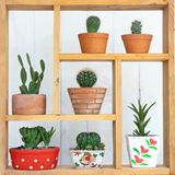 Small succulent pot plants decorative on wood window with morning warm light. Small succulent pot plants decorative on wood window frame with morning warm light stock image