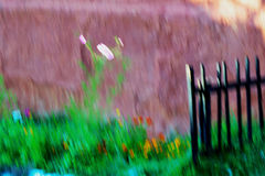 Small summer garden - Impressionist approach Stock Photo