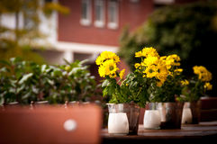 Small sunflowers in metal pails. On the wooden table outside the restaurant royalty free stock image