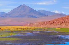 Small swamp in Atacama desert. Stock Photos