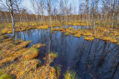 Small swamp with duckweed in forest Stock Photo