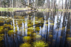A small swamp. Stock Images