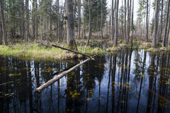 A small swamp. Stock Photography