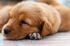 The small sweet little dog is looking for you.. another Stock Image