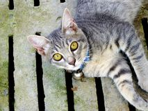 Small tabby cat laying on the floor. In the garden stock image