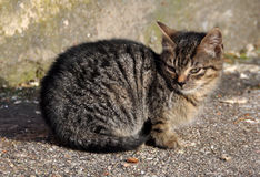 Small tabby cat on the road Stock Photo