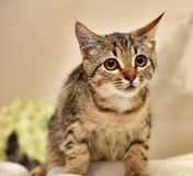 A small tabby cat Stock Photo