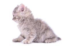 Small tabby kitten Stock Photos