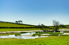 Small tarn surrounded by field Stock Photos