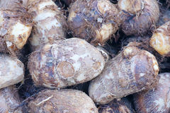 Small taro Royalty Free Stock Photos
