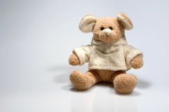 Small teddy bear. Sitting in a studio Stock Image