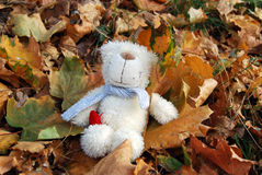 Small teddy bear with autumn leaves Royalty Free Stock Photos