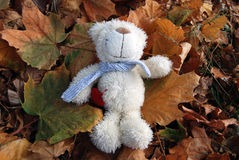 Small teddy bear with autumn leaves. Small teddy bear with autumn maple leaves stock photo