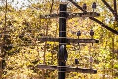 Small Telegraph pole Stock Image