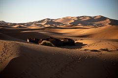 A small tend camp in desert in Algeria. Landscape of algerian desert with a small berberian tend camp royalty free stock photo