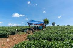 Small tent in tea farm Stock Image