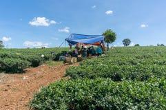 Small tent in tea farm Royalty Free Stock Photos