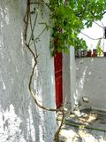 Red door and vine plants on a small terrace. Small terrace of a Mediterranean house with a red iron door Stock Photo