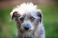 Small Terrier Crossbreed Dog in Sunlight Stock Photos