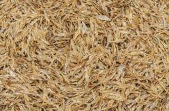 Small Thai dried fish Royalty Free Stock Photo