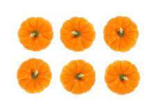 Small Thanksgiving pie pumpkins Royalty Free Stock Photo