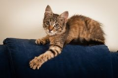 One Small three month kitten mixed breed stock photos