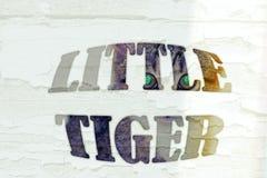 Small tiger vector illustration