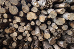 Small timber Stock Image