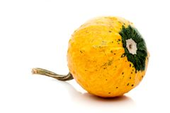 Small pumpkin isolated on white background Royalty Free Stock Image