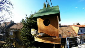A small tit birds feeding stock video footage