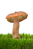 Small toadstool Stock Photos