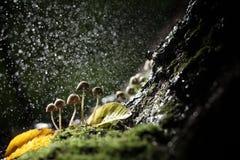 Small toadstool mushrooms small but dangerous Stock Photo