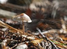 Small toadstools Royalty Free Stock Photo